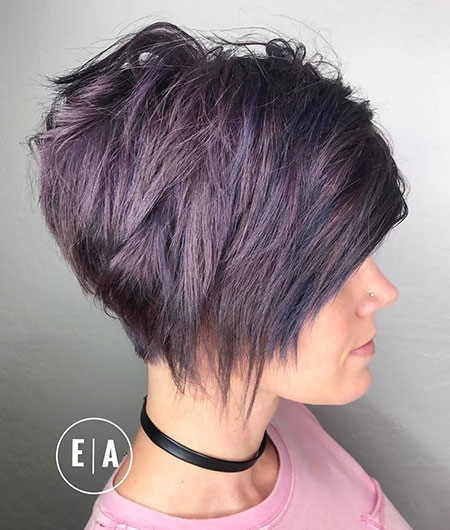 Pixie Bob Short Purple